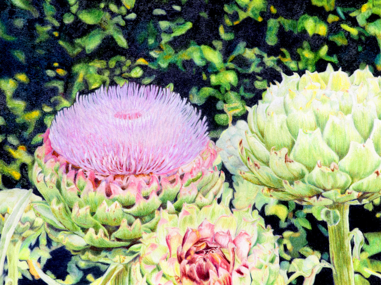 Stutesman Blooming Artichoke copy-002.jpg