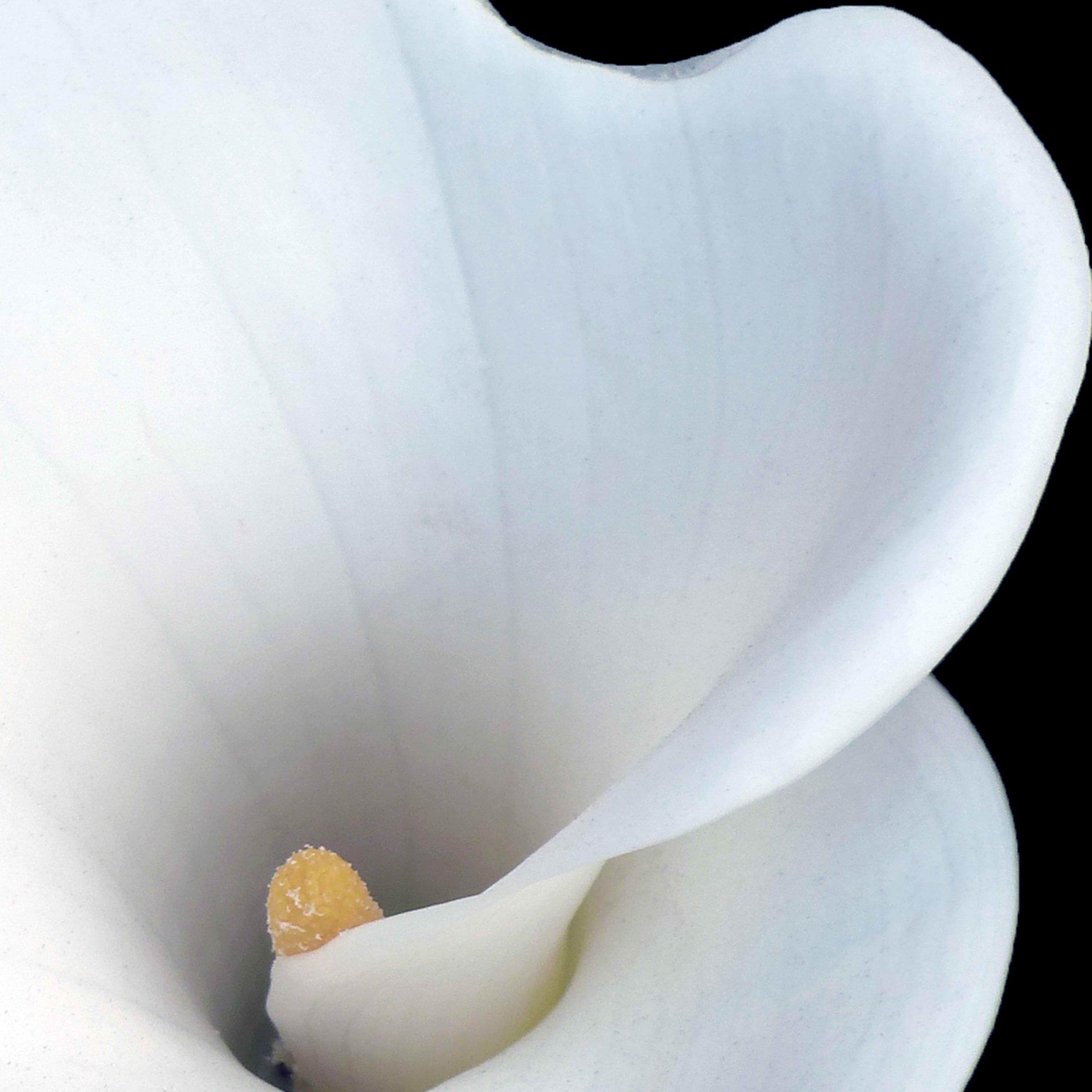 Bruce Nelson, Fine Art Photograph,  Carmel Mission Lily.jpg