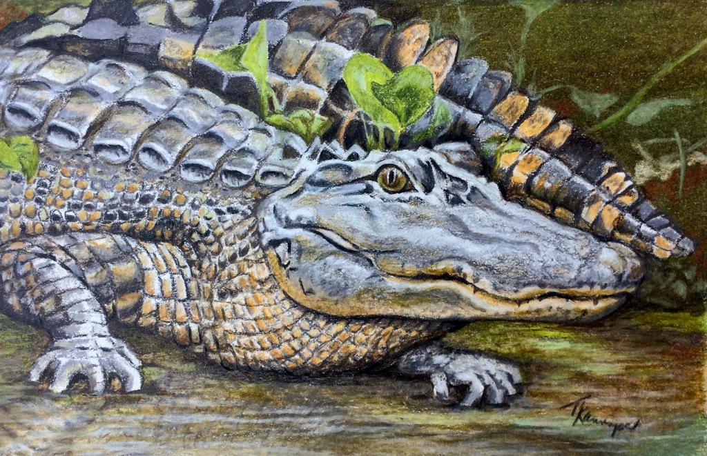 1-Tina Kannapel, Colored Pencil Wildlife Painting, SVFAL, Asheville, NC-1.JPG