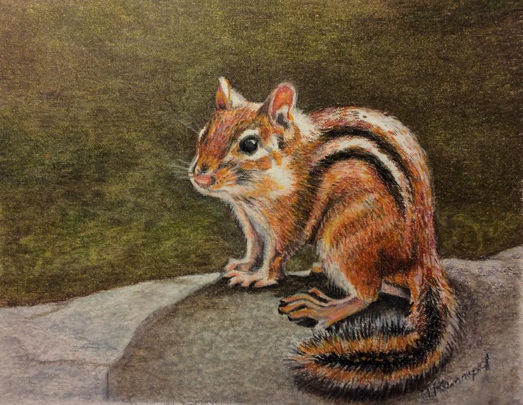 2-Tina Kannapel, Colored Pencil Wildlife Painting, SVFAL, Black Mountain, NC-1.JPG