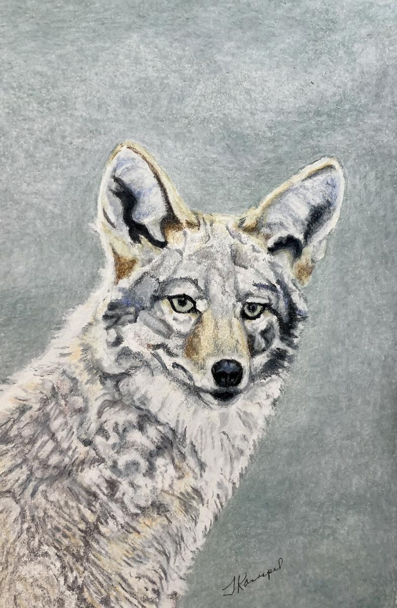 05-Tina Kannapel, Colored Pencil Animal Painting, SVFAL, Asheville, NC-1.JPG