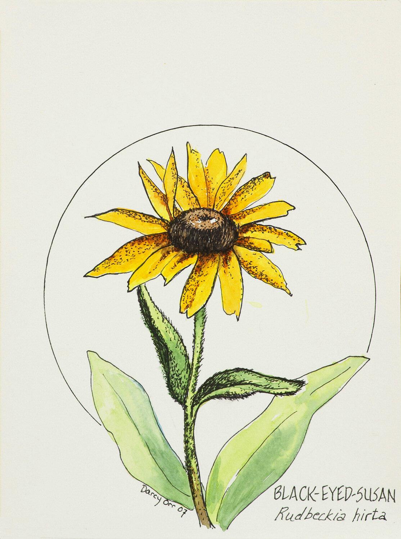 Darcy Orr, Flower Illustration, SVFAL.875)-002.jpg