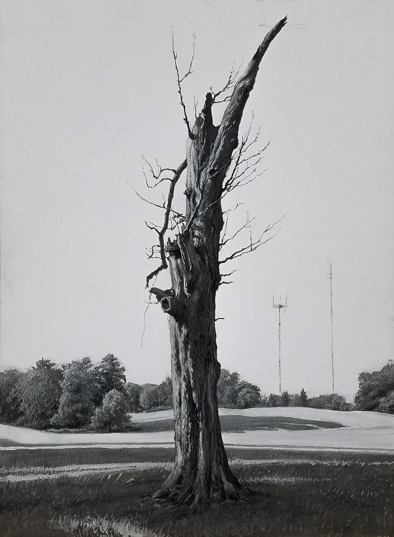 """Druid Hill Tree  Gouache 11""""X8"""""""