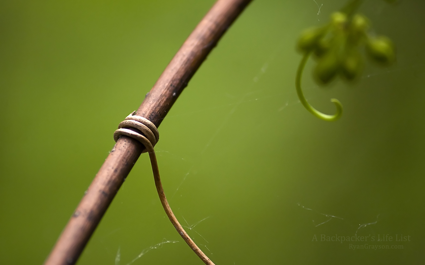 Tendril at Indiana Dunes