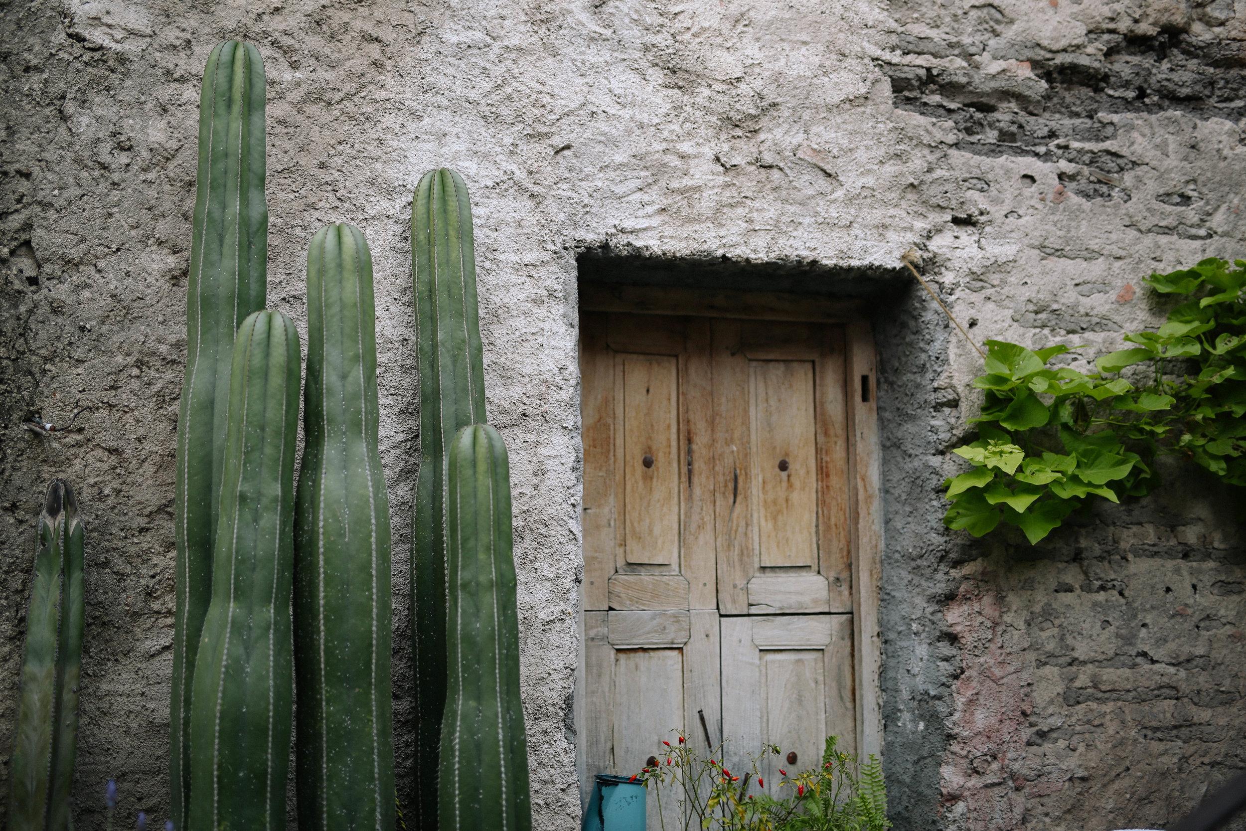 door with cactus