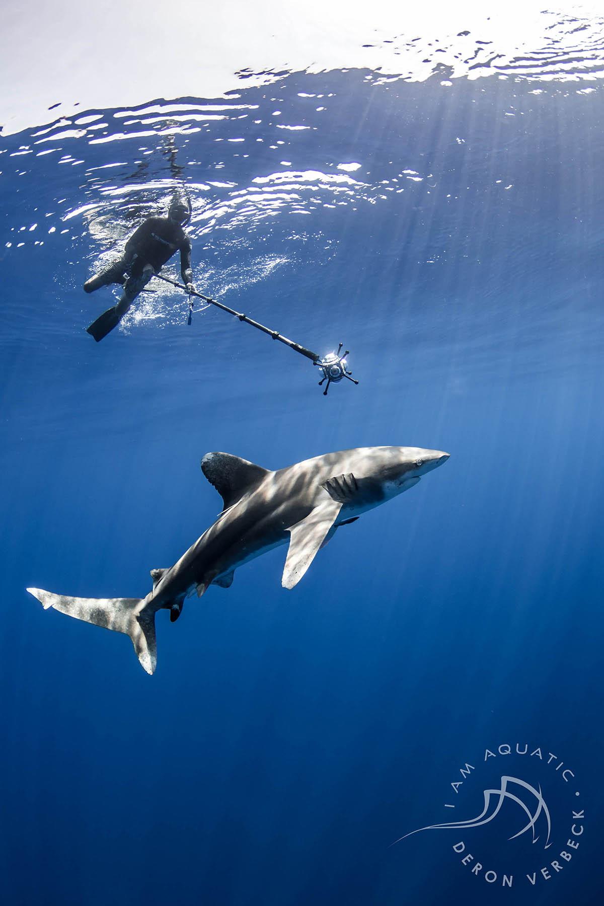 tom-with-shark-small-version.jpg