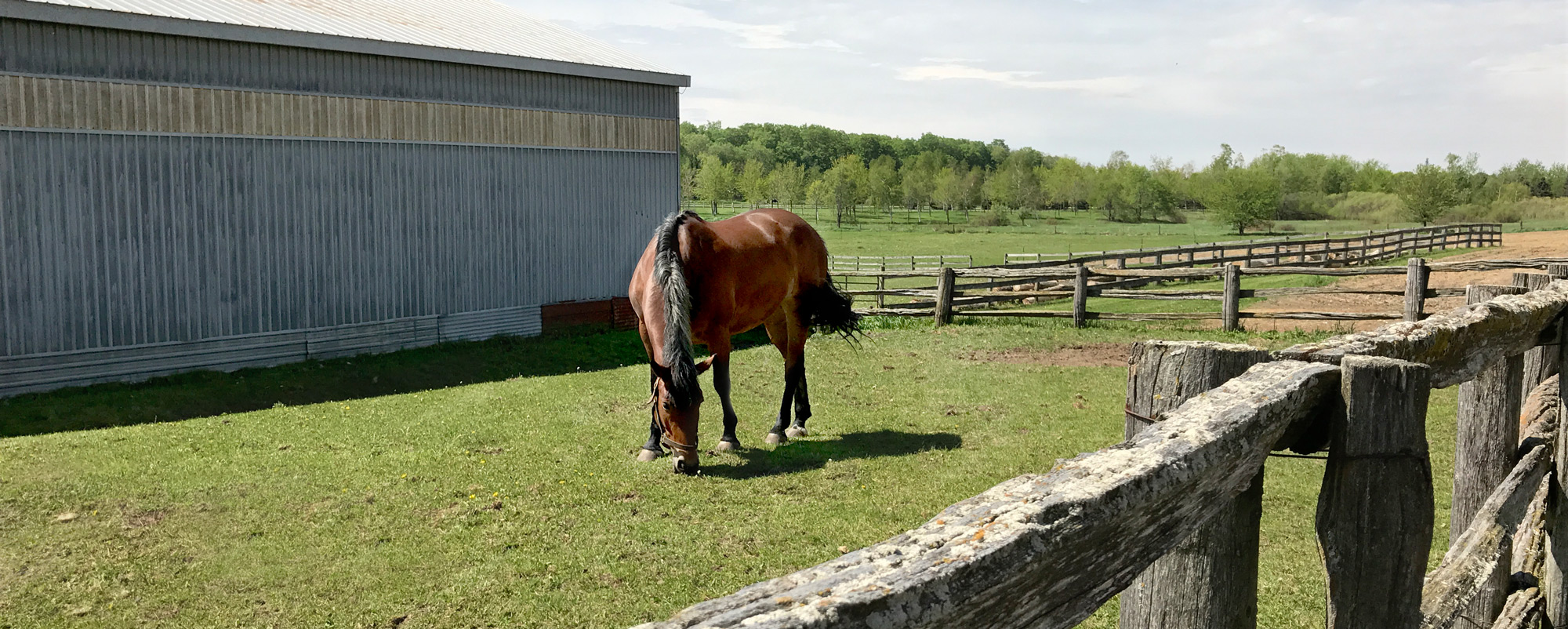 Moondance-equine-assisted-therapy-field4b.jpg