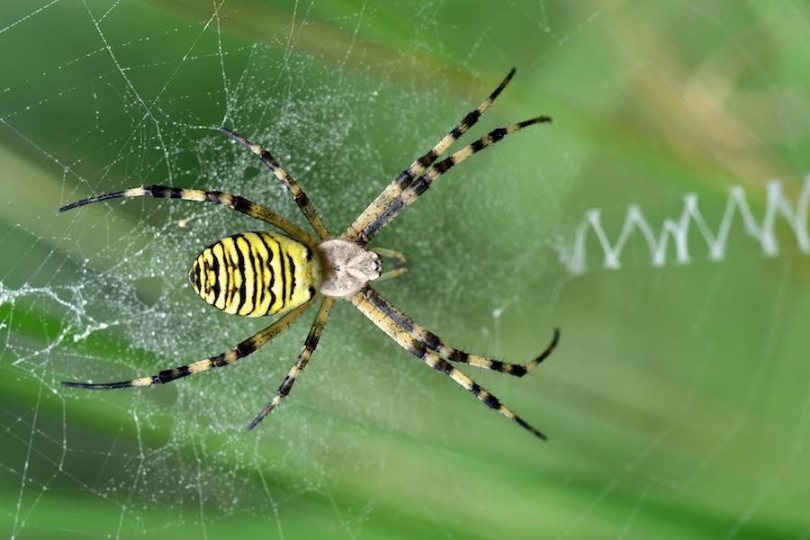 spider-small.jpg