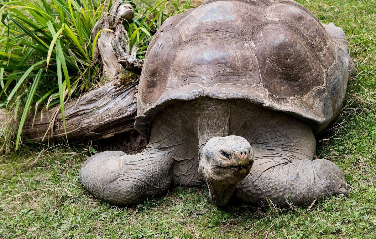 turtle-small.jpg