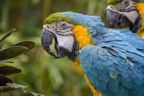 parrot-small.jpg