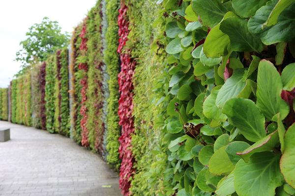 The_NEC5_Living Wall_SMI National_ANS Global.jpg