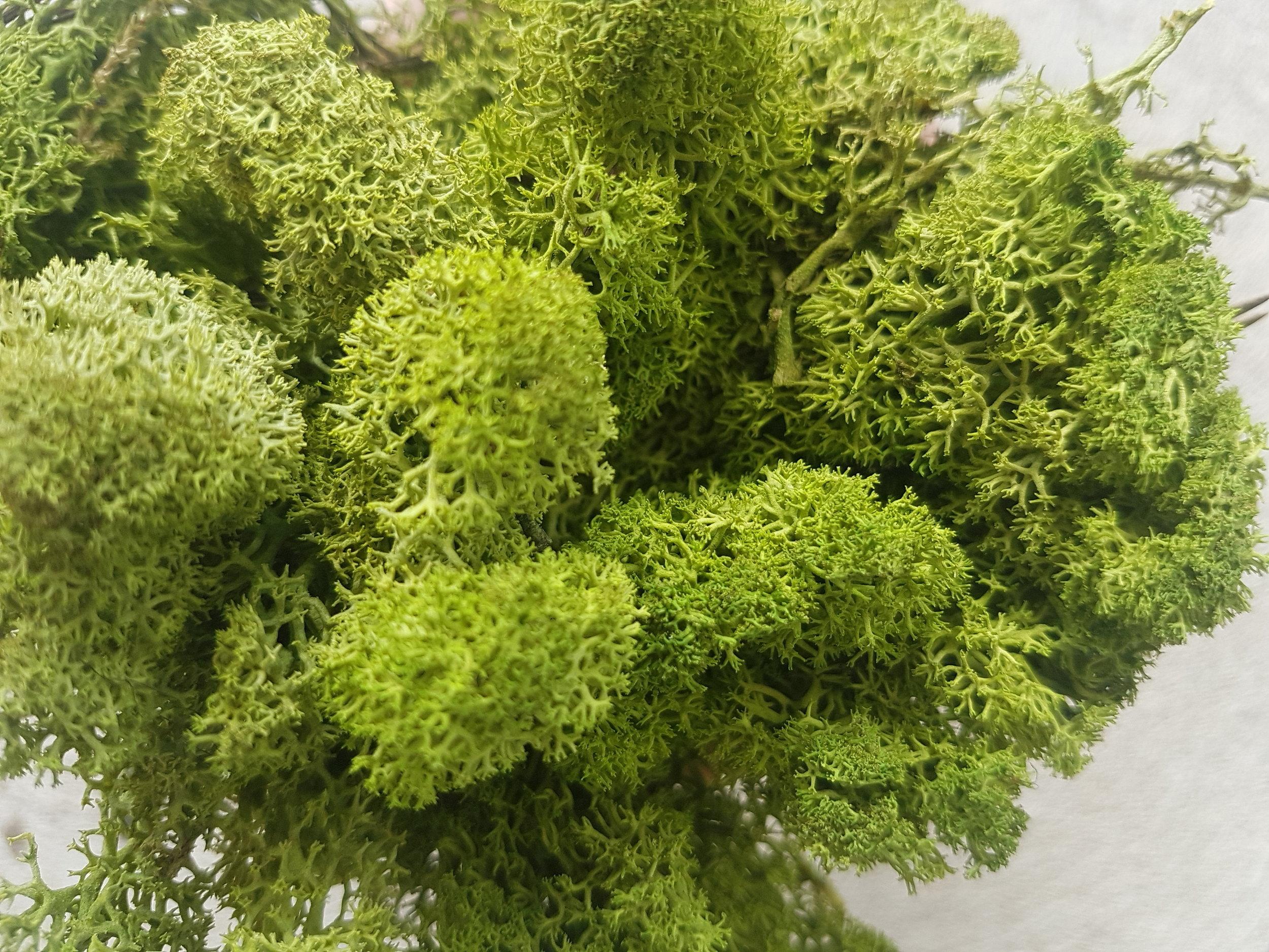 SMI National_Moss Art_Standard Green.jpg