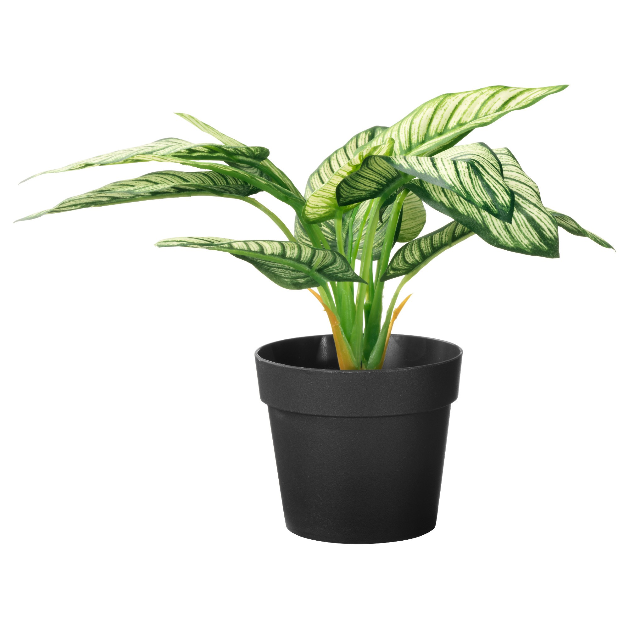 SMI National_Green Potted.jpg