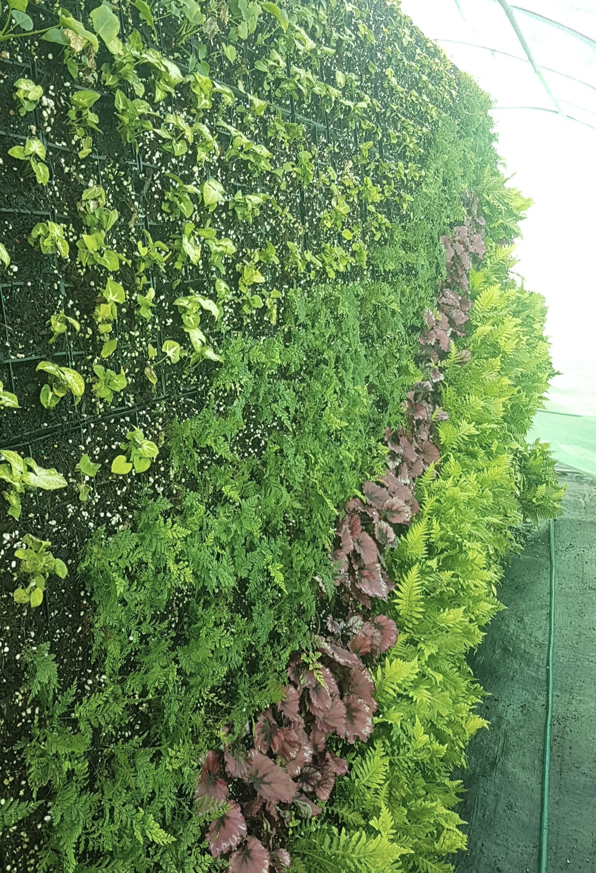 SMI National_Living Wall_Clonard College_20180726_120114.jpg
