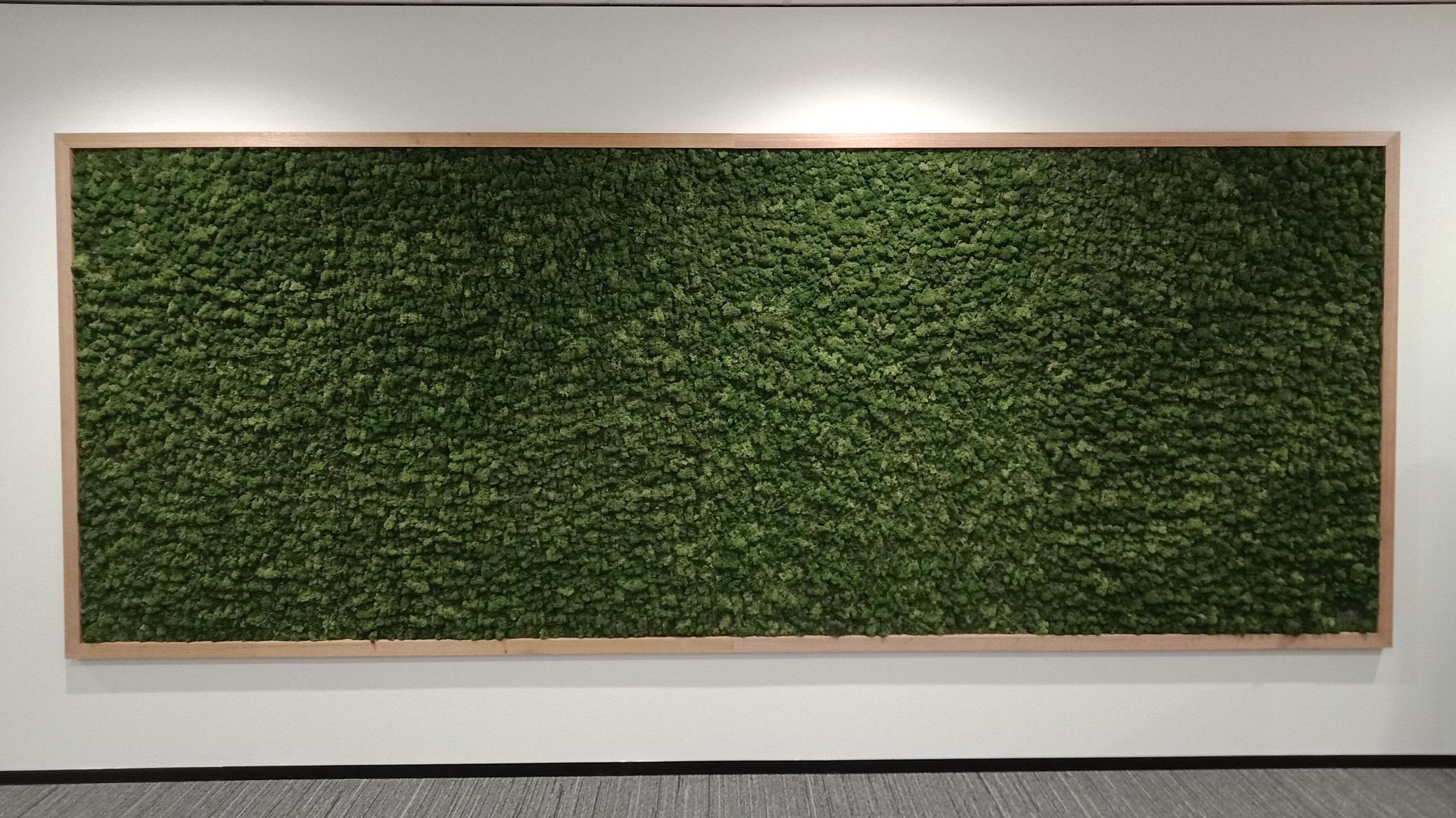 Moss+Wall+-+Kaufland+1.jpg
