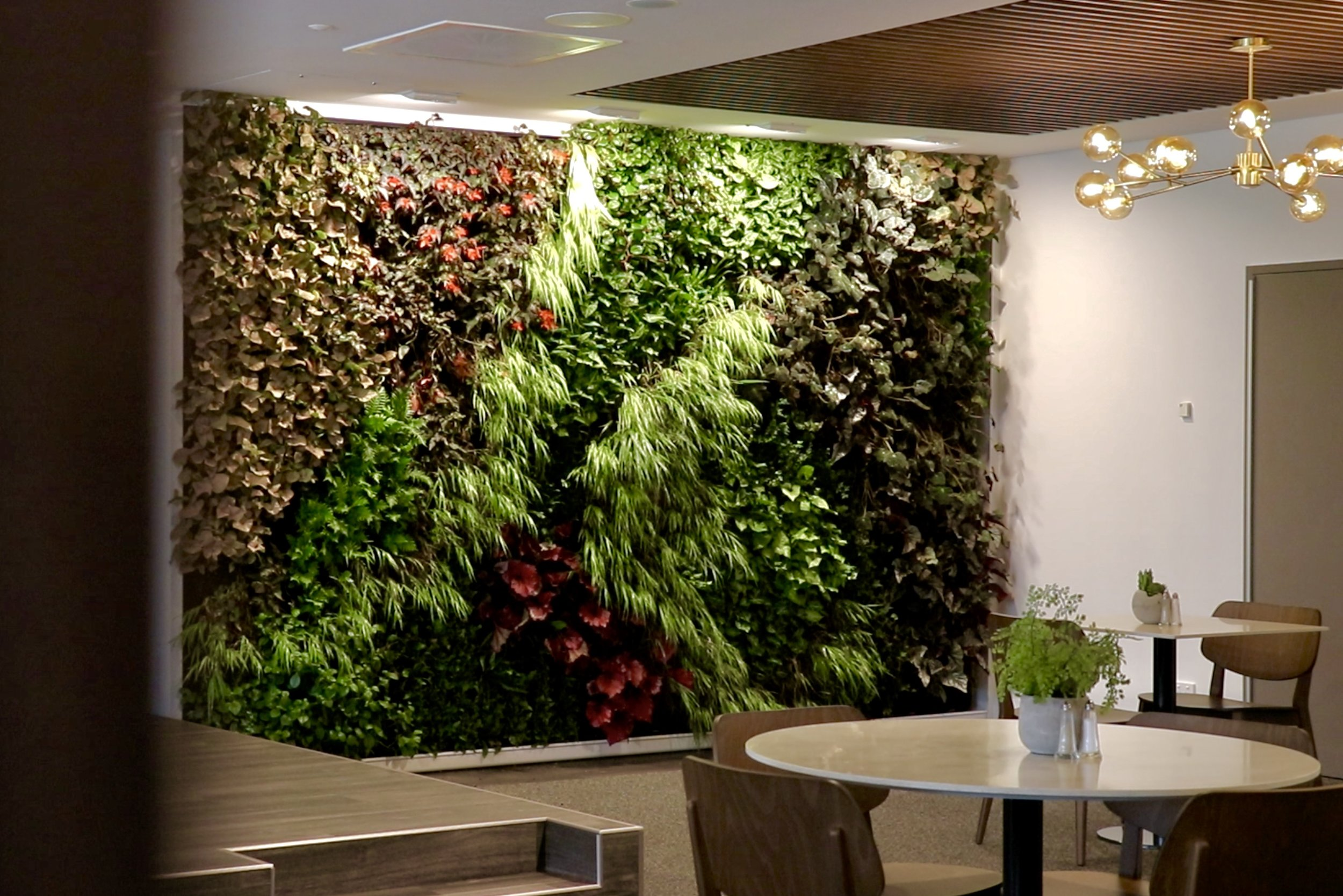 SMINational_LivingWall_Ramsay HealthCare_St Leonards.png