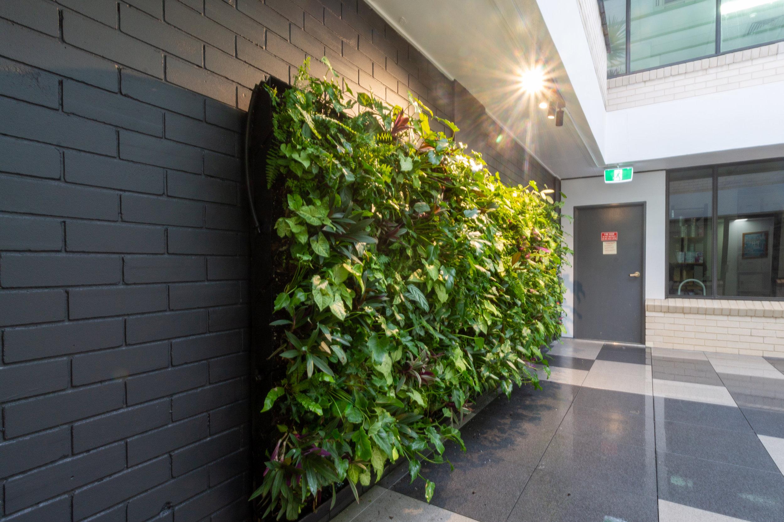 Hasbuilt - Living Wall - Property Bank of Australia 1.jpg