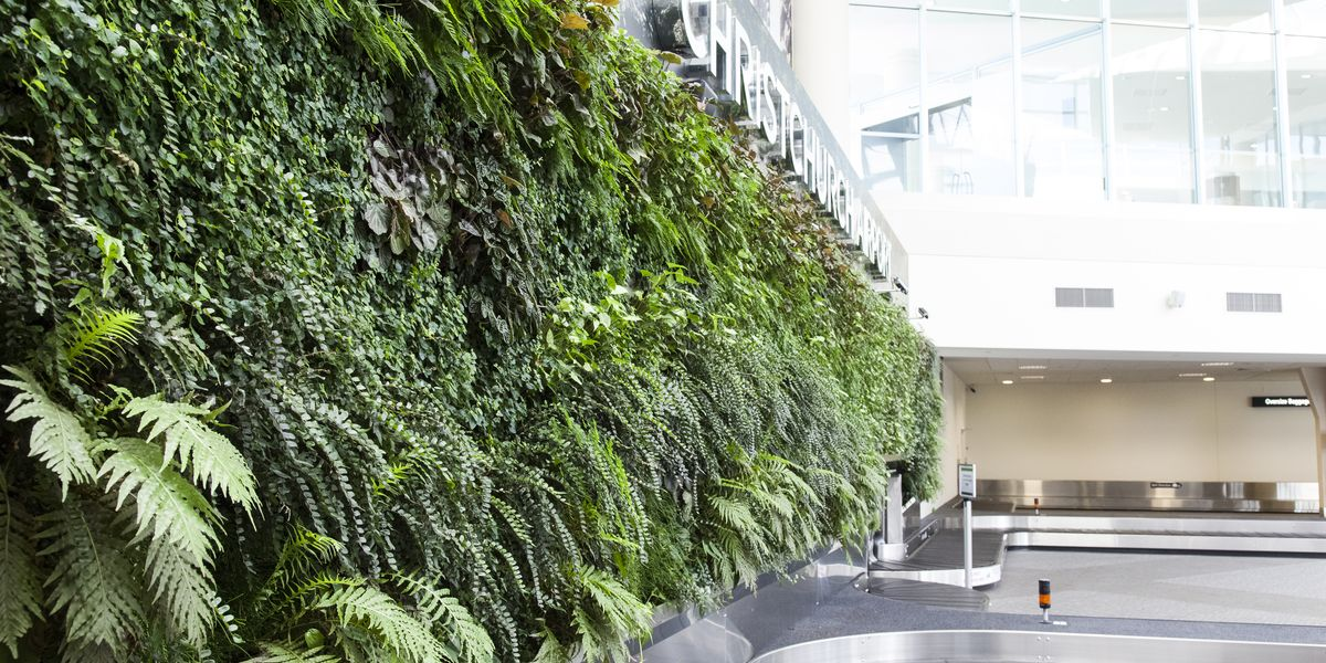 SMI National_Living Wall_Christchurch Airport_ANS Global Module design_Oasis.jpg
