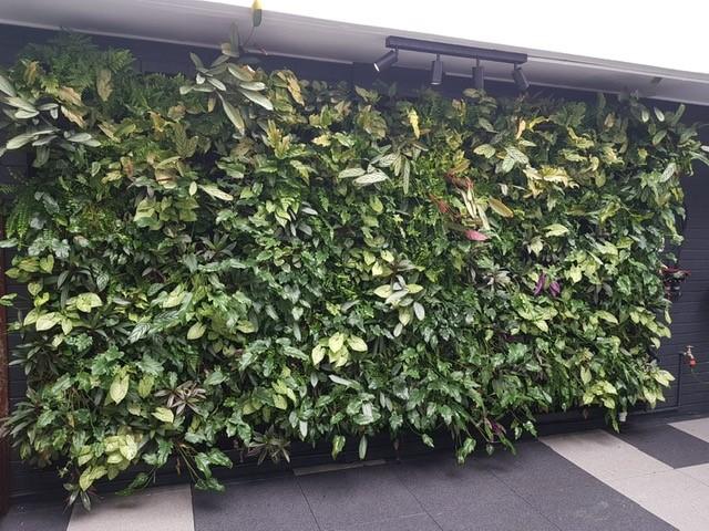 Hasbuilt - Living Wall Extension - Property Bank of Australia.jpg