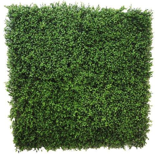Green Verbena