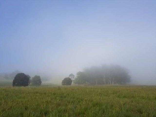 Early morning summer mist in the valley. Not my usual type work. but, still okay. #landscapephotography #newzealandartist #artforum #iso_society #fineart  #fineartforum #modernart #kunst #curator #artistsoninstagram #sydneyartist #art #ratemodernart #fineartlandscape