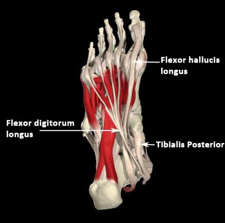 mm_deep-front-line-foot.jpg