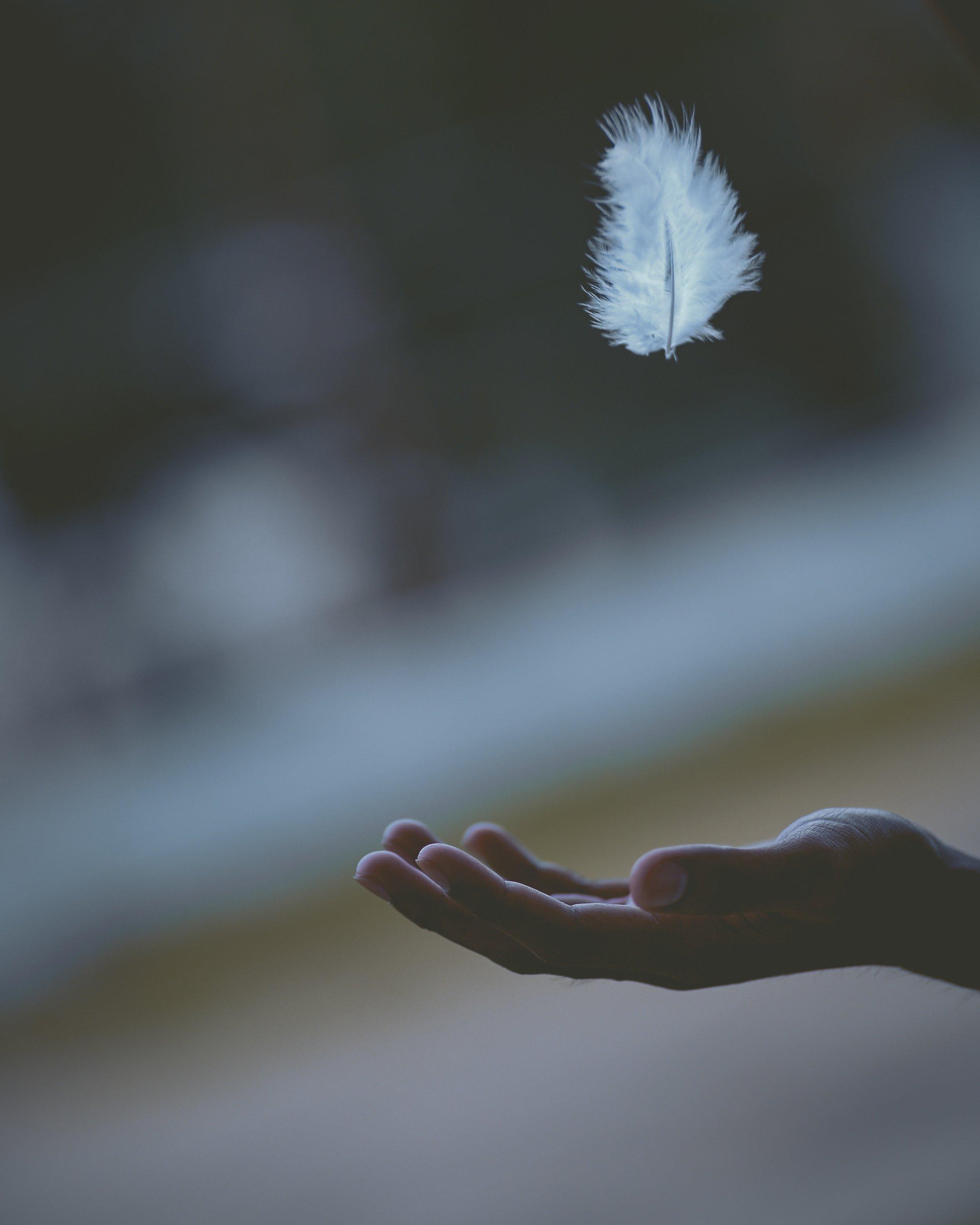 hand and feather javardh-680975-unsplash.jpg