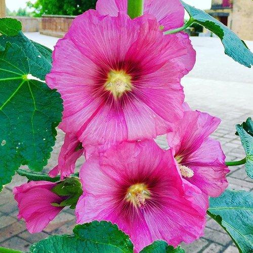 Flowers 22.32.49.jpg