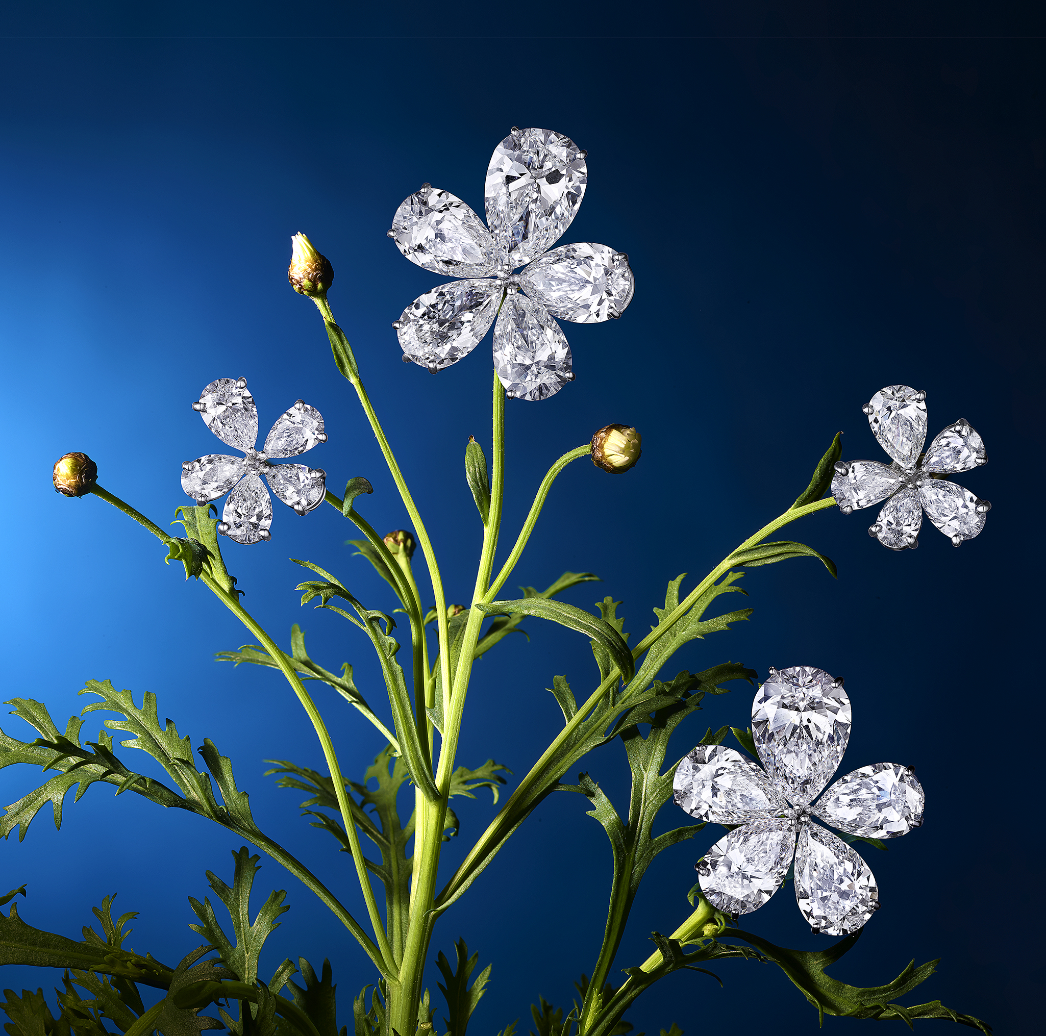 Flower Graff V1.jpg