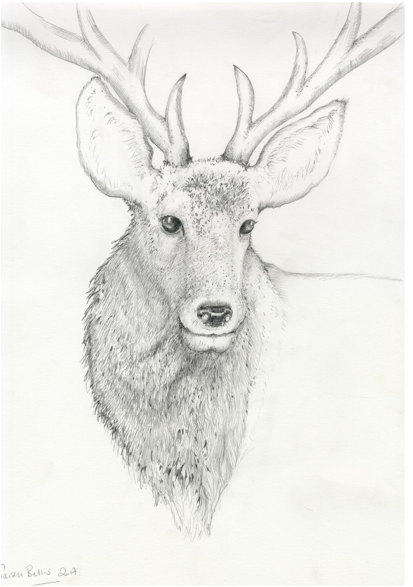 STag Pencil JPEG.png