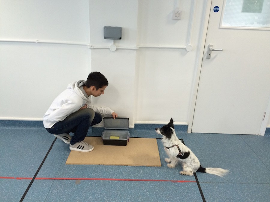 Patrizia Piotti, of the University of Portsmouth's Dog Cognition Centre, with one of the dogs taking part in the study