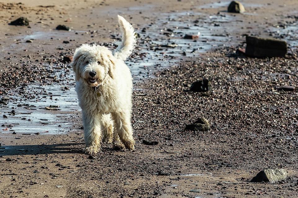 dogs southsea beach.jpg