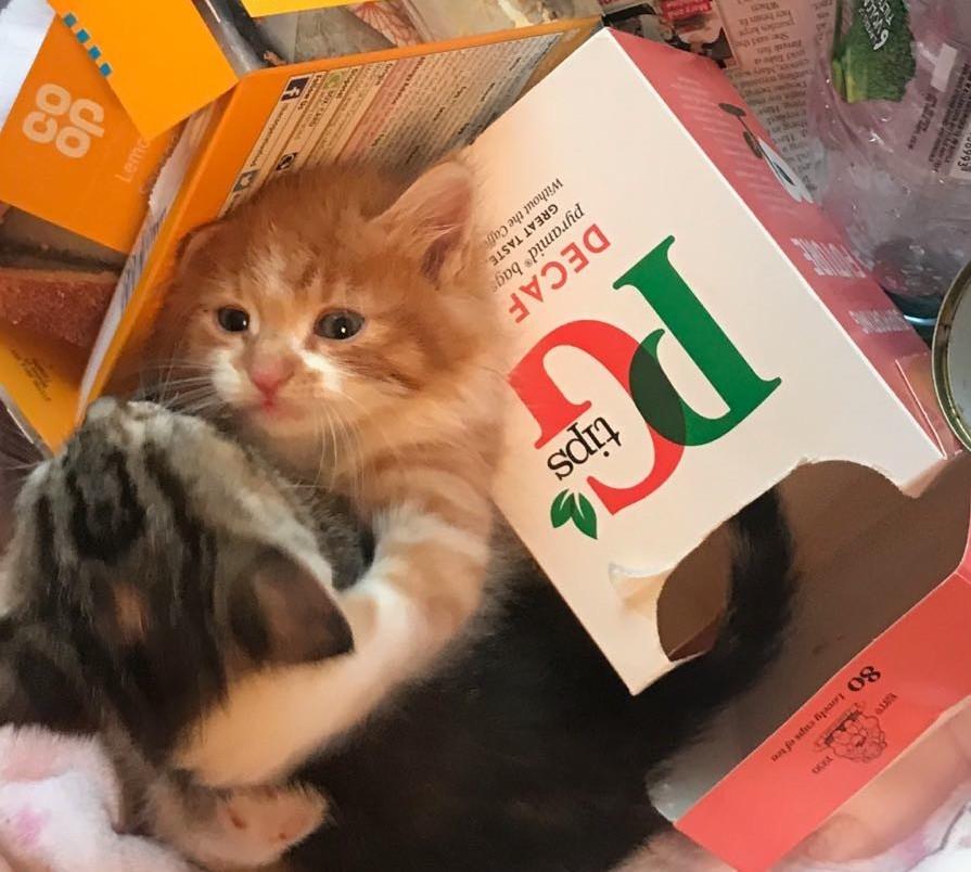 rescused portsmouth kittens.jpg