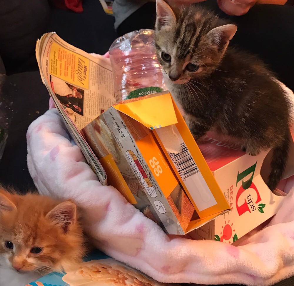rescued portsmouth kittens.jpg