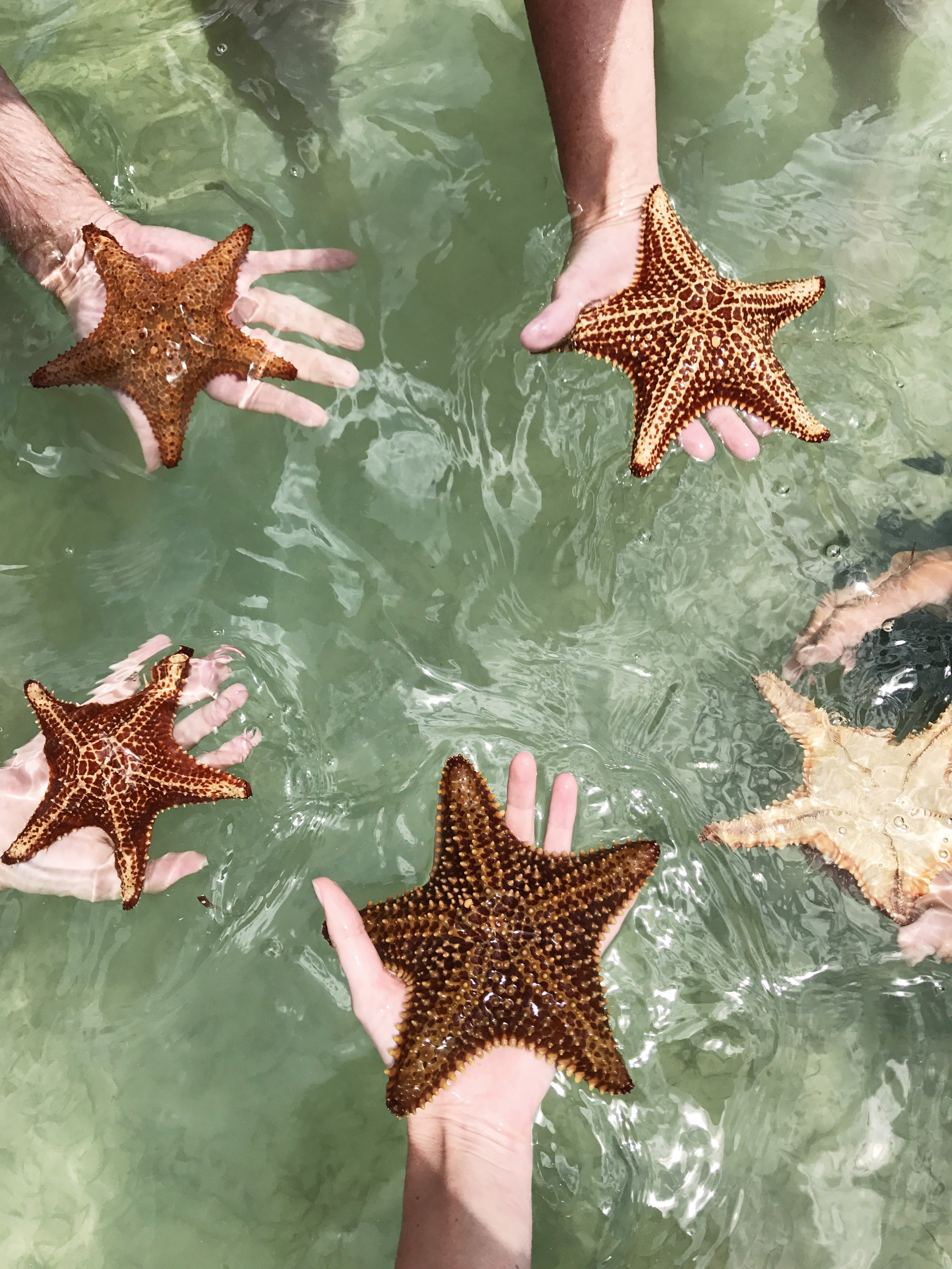 Grand Cayman starfish