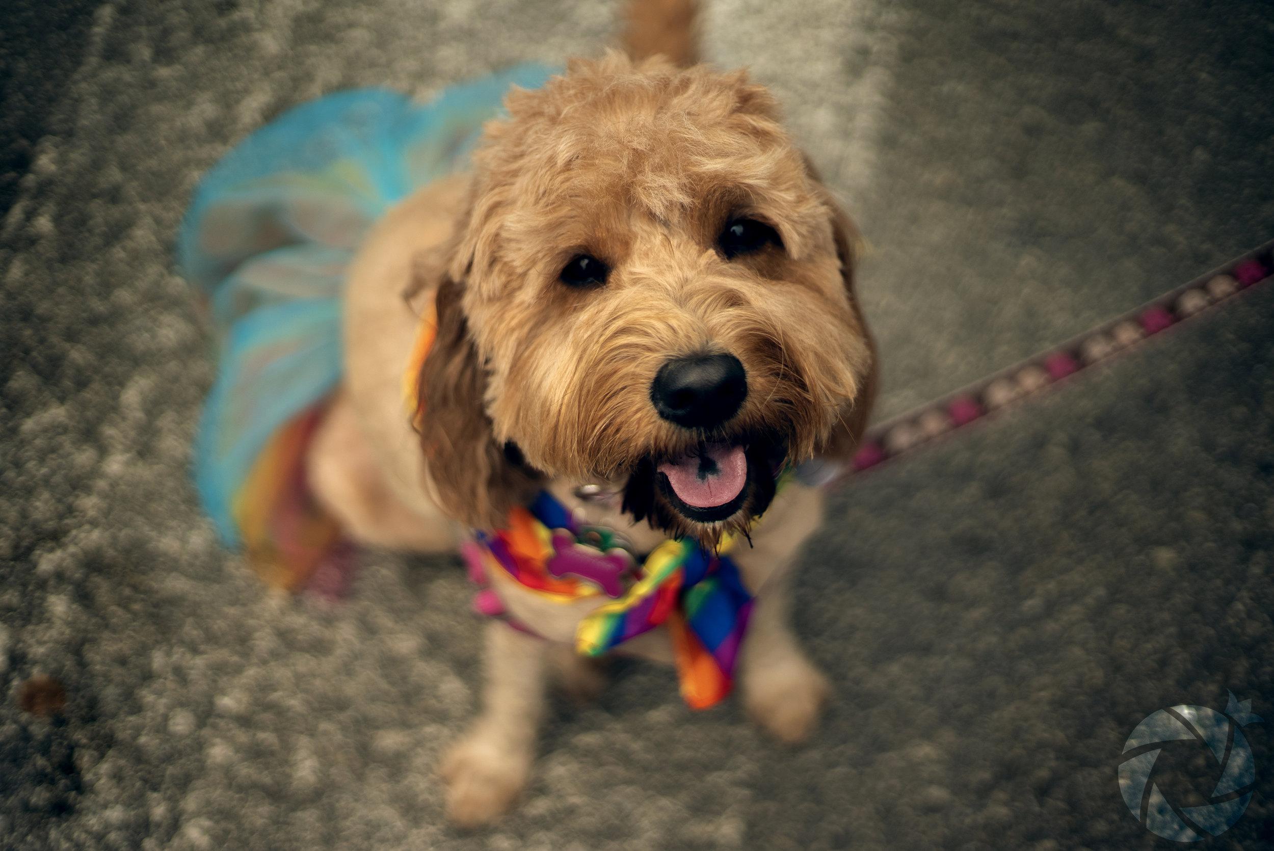Pride Puppy.jpg