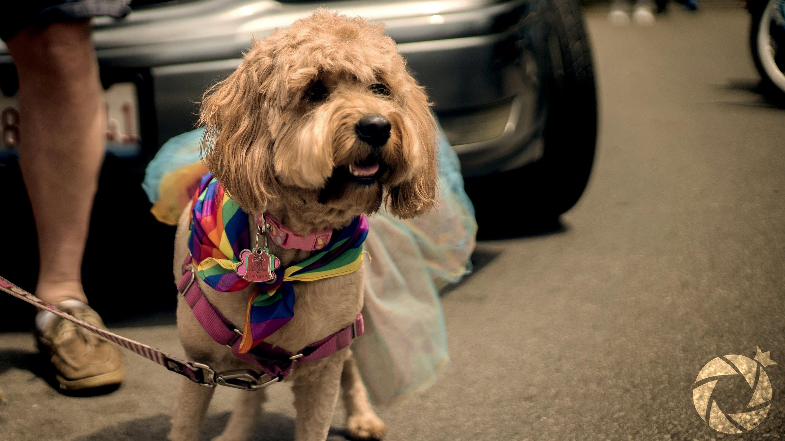 Pride Puppy2.jpg