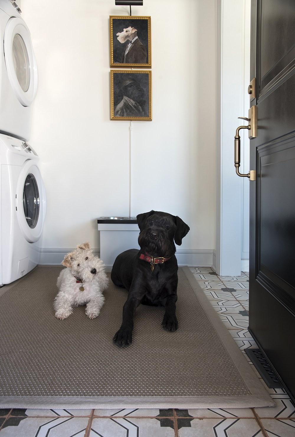 Dogs-In-the-Mud-Room.jpg