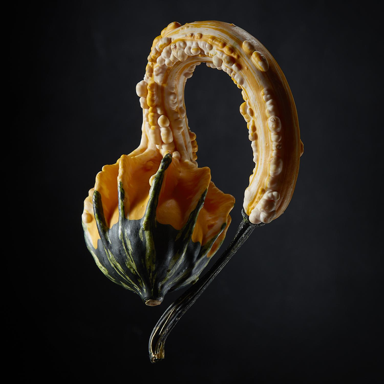 GourdPortrait-3.jpg