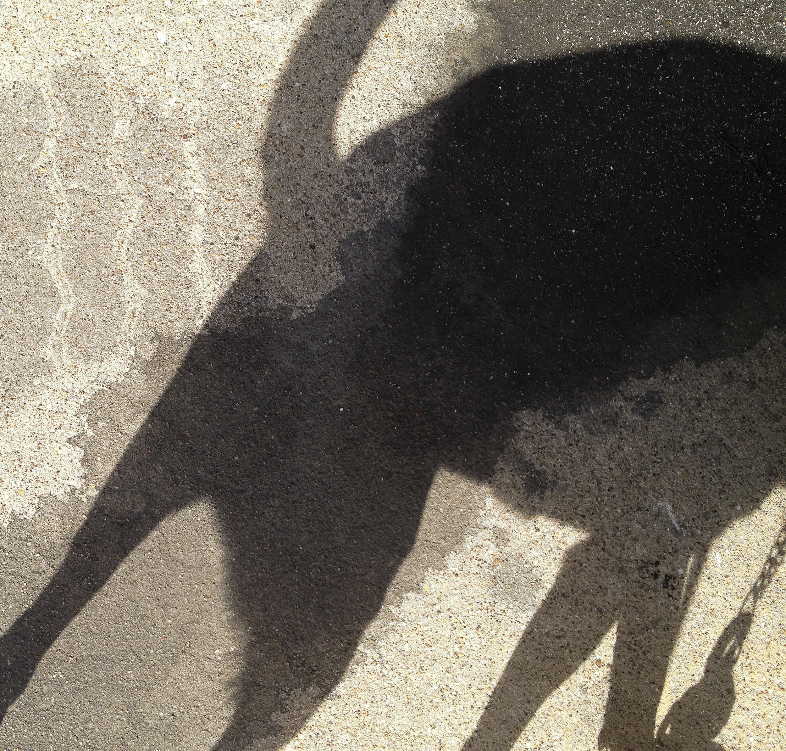Jake_Shadow-2014-IMG_4599-cropped.jpg
