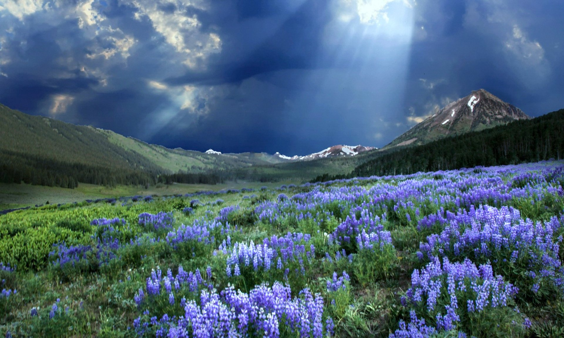 colorado-crested-butte-wildflower-festival.jpg