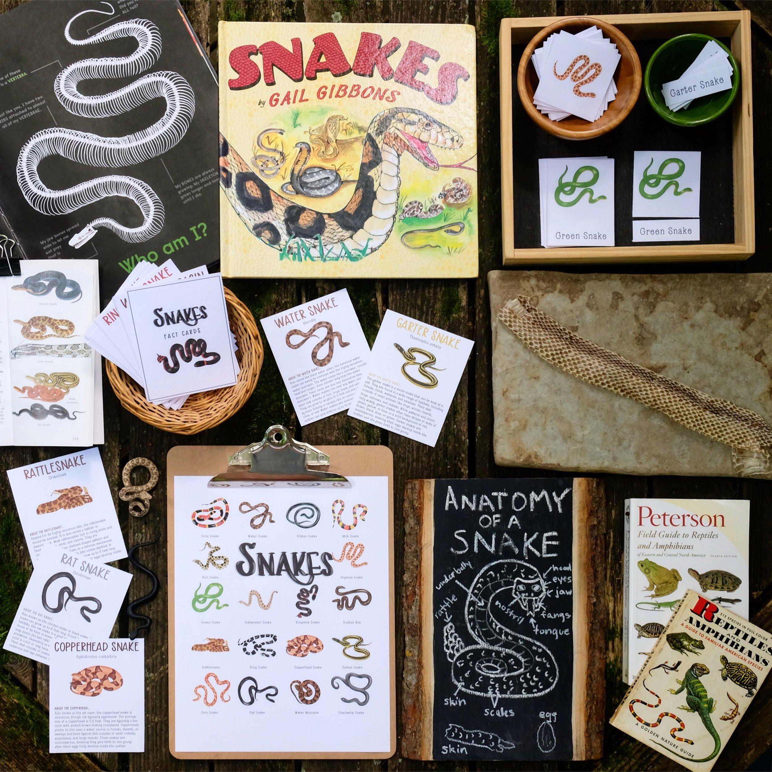 Snakes Nature Study.JPG