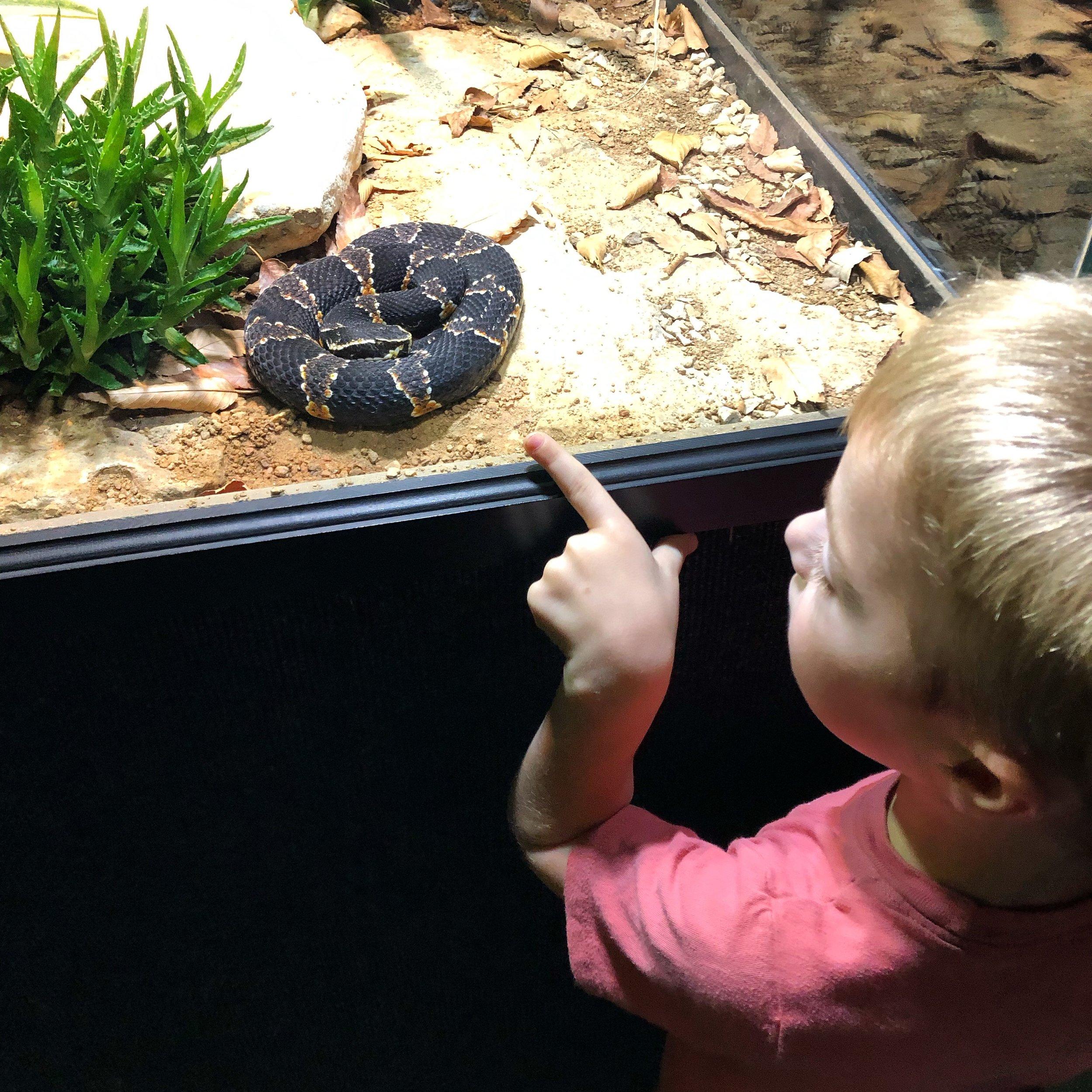 Snake Observation.JPG
