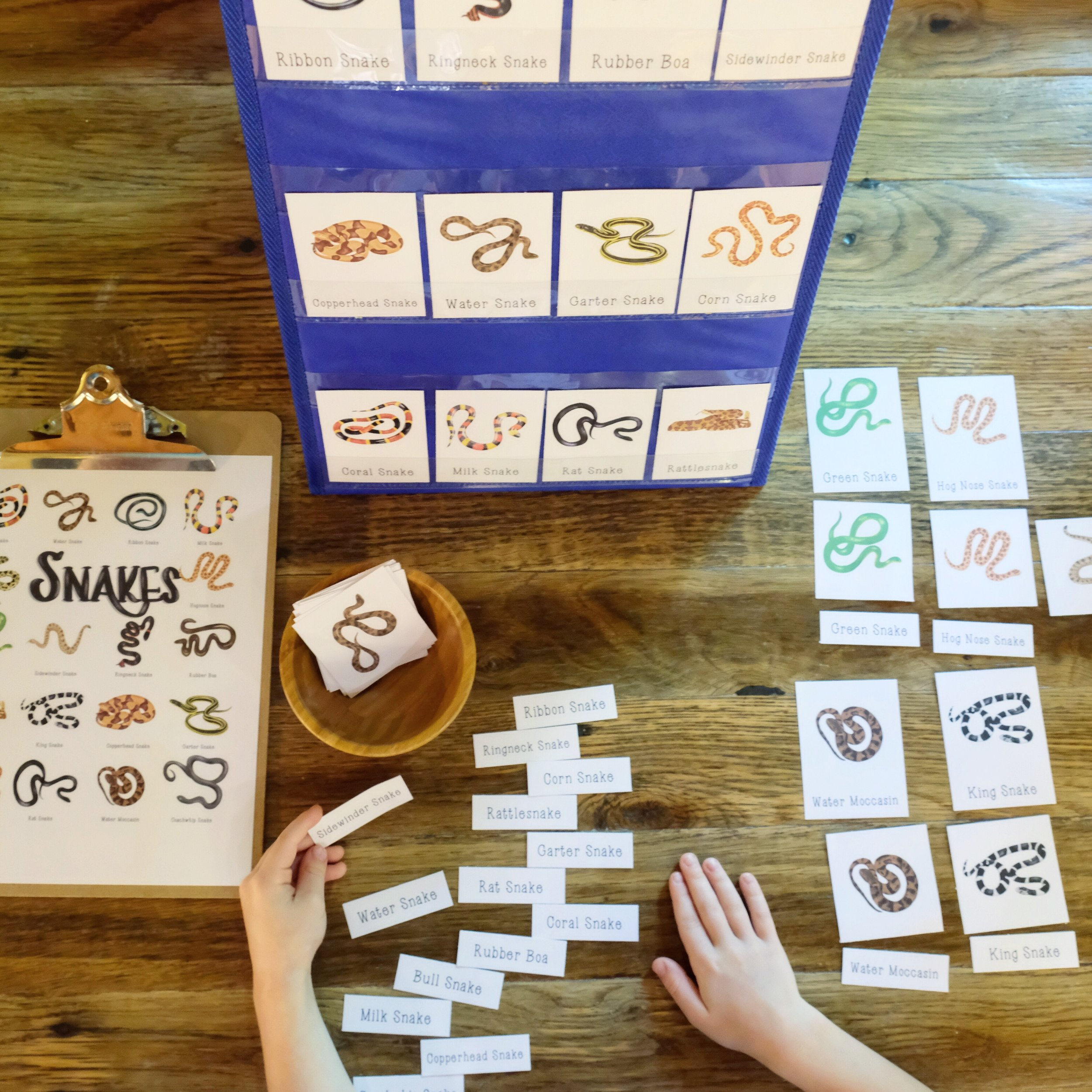 Snakes 3-Part Cards.JPG
