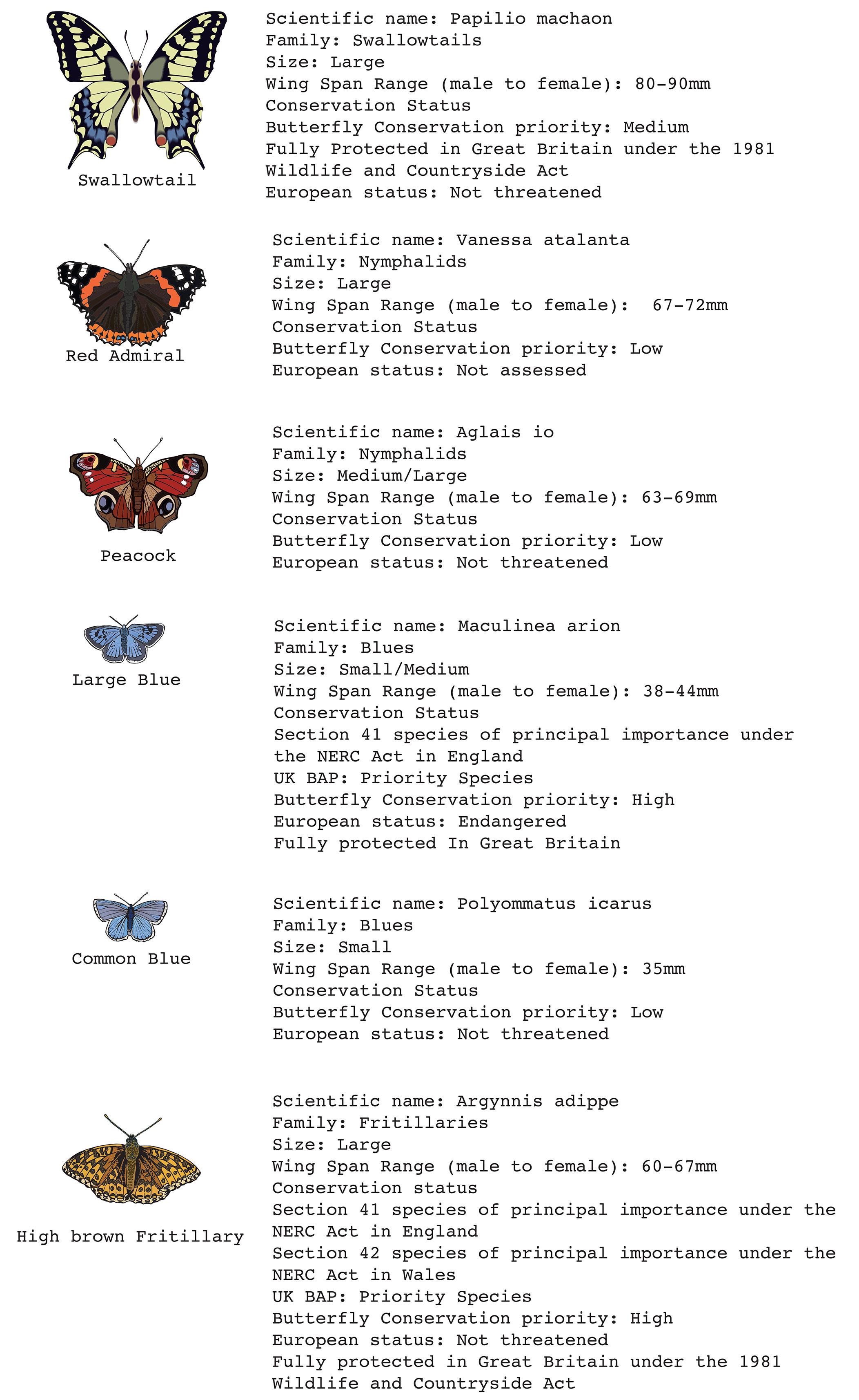 butterfly file.jpg
