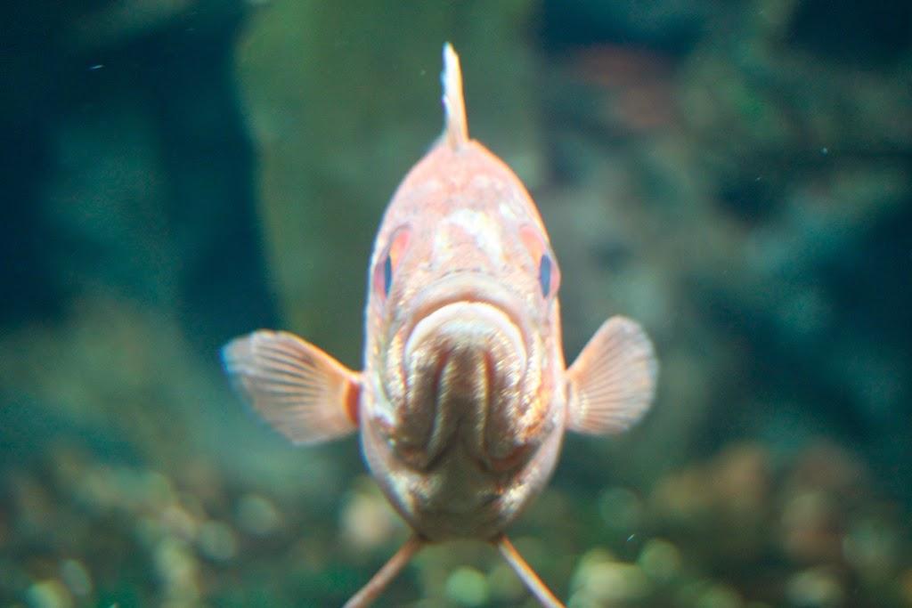 Sad Fish.jpg