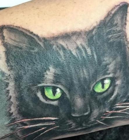 PZ_blackcats.jpg