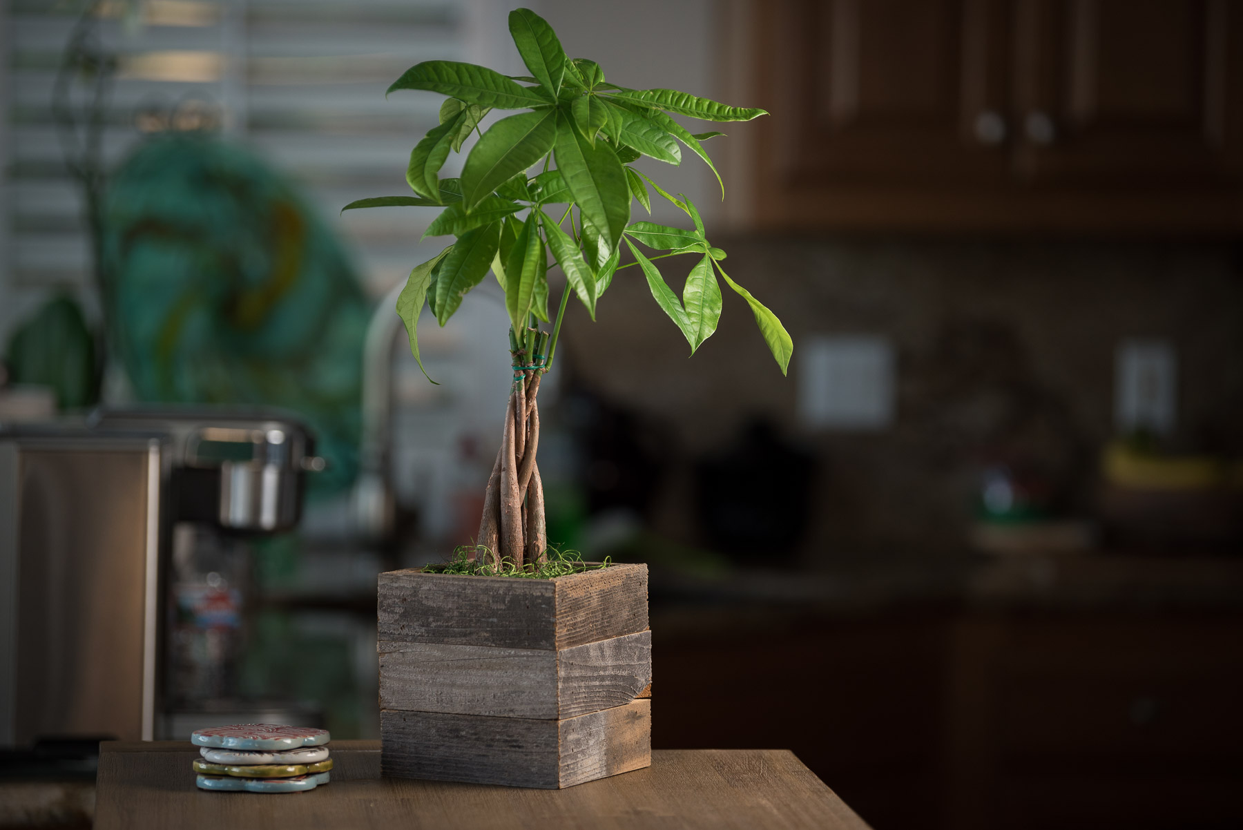 Braided Money Tree In Reclaimed Wood Zen Again Planter Pacific Royal