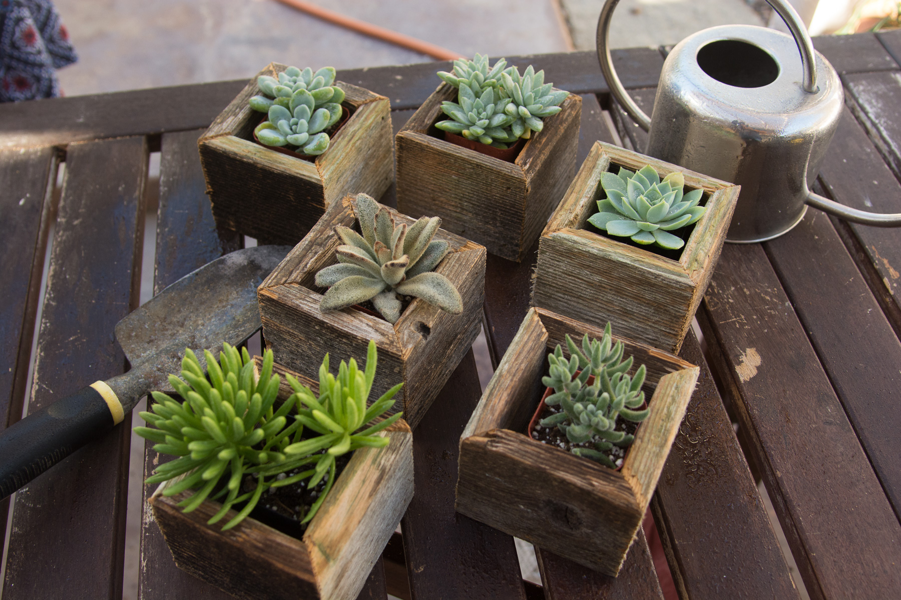 Mini Salvaged Wooden Succulent Cube Planters Pacific Royal