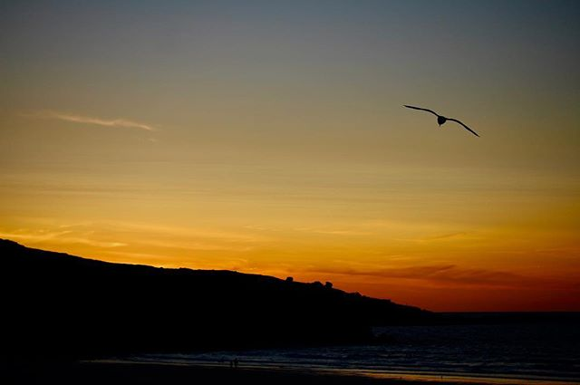 Seagull at sunset #summer #sunset #thepipas2018